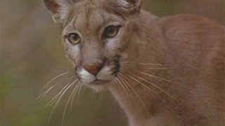 Cougar Kim Bauer 24 Season 2